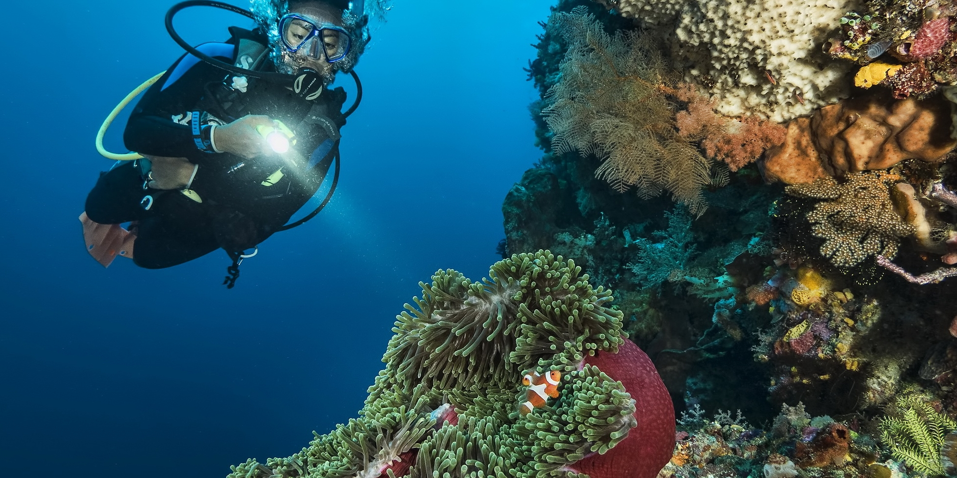 Atauro Island is a must for those with a frontier spirit & a love of dramatic, vivid wall dives
